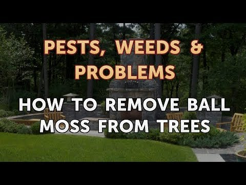 How to Remove Ball Moss From Trees