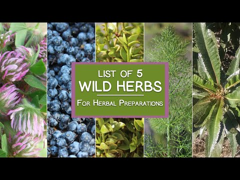 List of 5 Wild Herbs to Harvest for Herbal Preparations