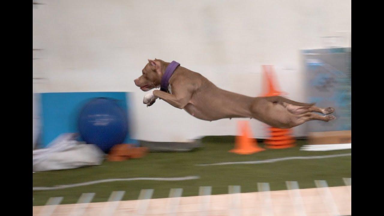 Соревнования Jump'n'Gym 22.02.2020