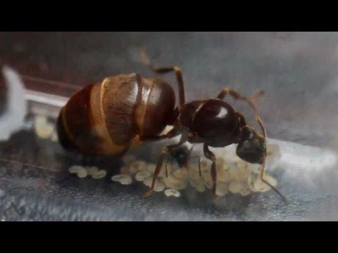 ADOPTION & PROGRESS | 3 Month Queen Ant Update
