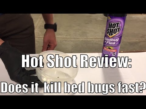 Hot Shot Review: Does it work to kill bed bugs?