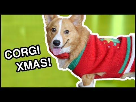 A Very Corgi Christmas | Vlog