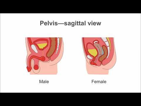 Identifying ascites on ultrasound