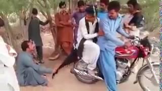 funy Baloch