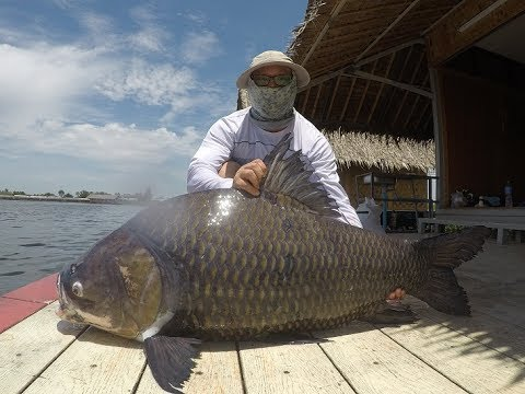Go Pro Hero 5 Video !! 100KG Giant Siamese Carp Fishing Thailand- BKKGUY