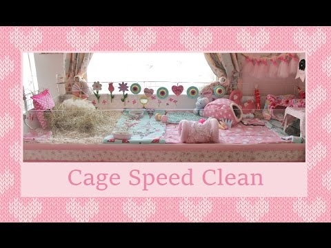 Guinea Pig Cage Speed Clean