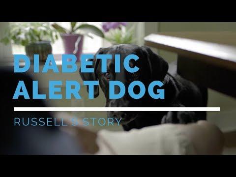 Diabetic Alert Dog: Russell's Story