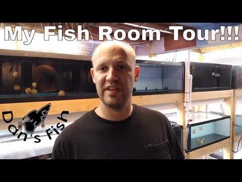 My Fishroom Tour