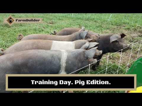 Training Pigs to Fence.