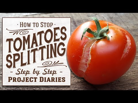★ How to: Stop Tomatoes Splitting (A Full Information Video)