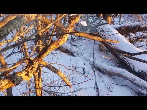 Skidding Agggainnn......Brrrr   ( Mid Winter Firewood Ops & International 1066 Skidding)
