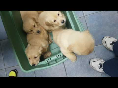 9 puppies at the vets