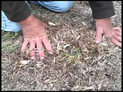 How To Repair Dead Patches In Your Lawn