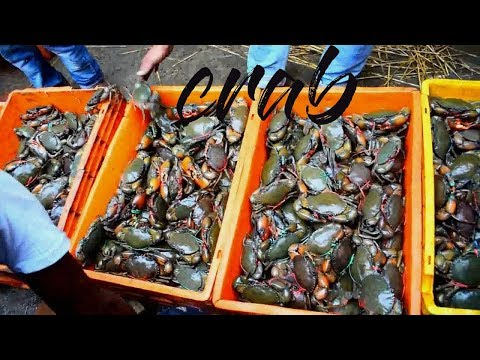 biggest crab market | local crab market for purchase | river crab in india