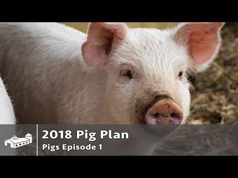 $14,300 From Raising Pigs For Pork