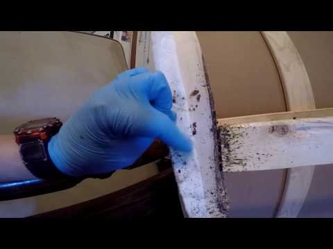 MOST EXTENSIVE BED BUG TREATMENT ON YOUTUBE! - Learn how to DIY bed bugs