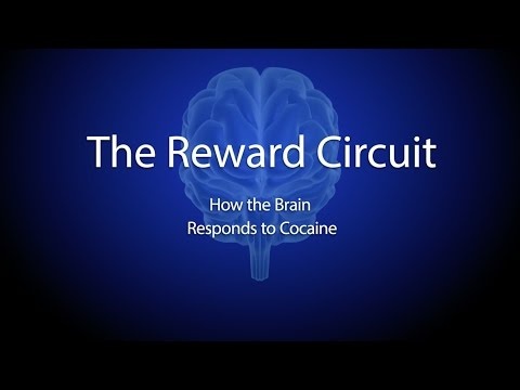 The Reward Circuit: How the Brain Responds to Cocaine