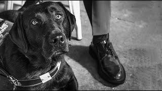"""Trailer—'Dogs of Destiny' S1:E3 """"Freedom Walk"""""""