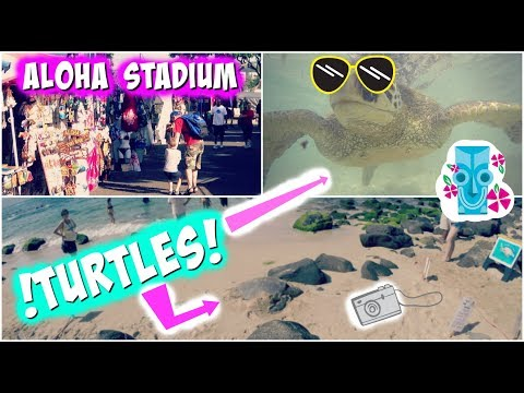 Hawaii Vlog Day 3, TURTLES!!!