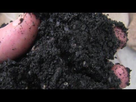 BioChar Plant Pot Trials - The Set-Up