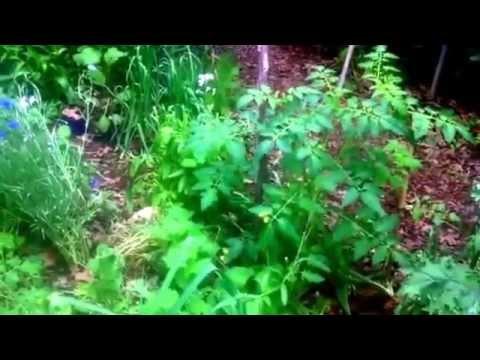 Spring Urban Hugelkultur mound and Back To Eden beds update