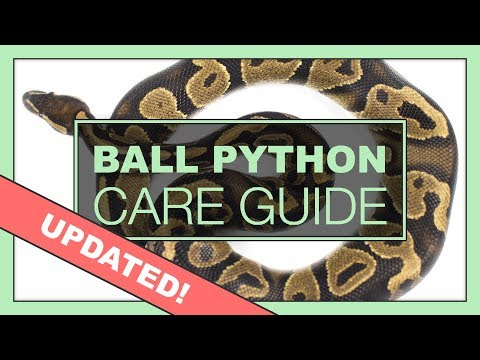 Complete Ball Python Setup & Care Guide | UPDATED VERSION