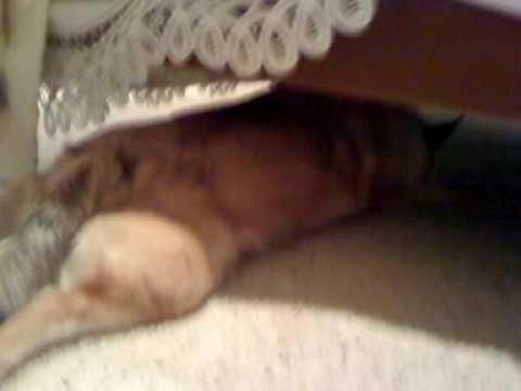 Wolfie sleeps funny under the bed.