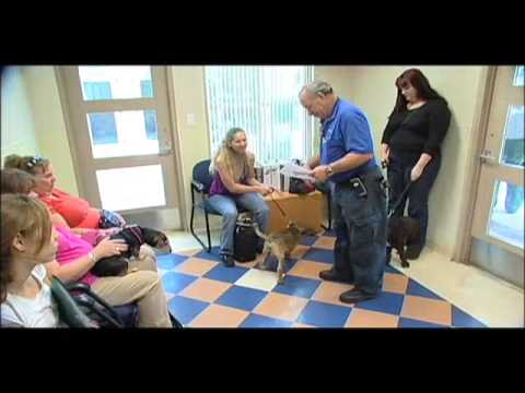 County Chronicles - Pet Microchipping