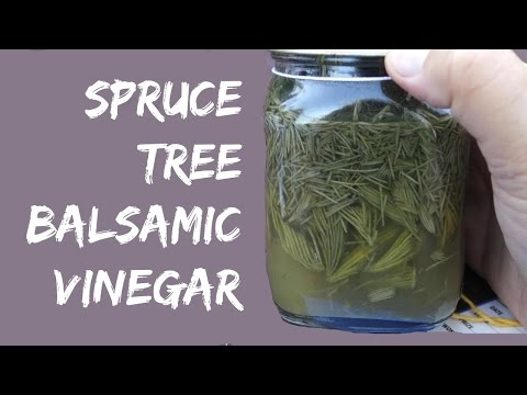 How to make Balsamic Vinegar from Spruce Trees