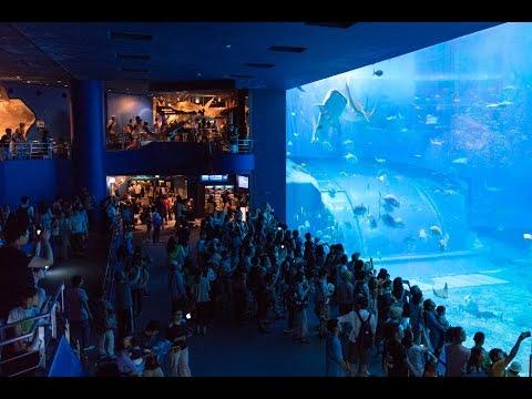 [4K60p] 美ら海水族館 黒潮の海 Kuroshio Sea at Okinawa Churaumi Aquarium