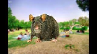 #شاهد ... جحور #الفئران تملأ إحدى أهم المتنزهات في #الأحساء !!
