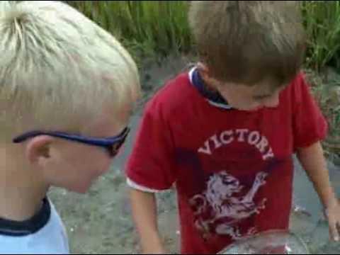 catching fiddler crabs