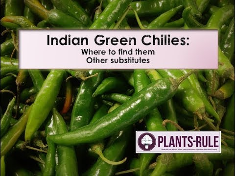 Indian Green Chilies: Where to Find and How to Substitute