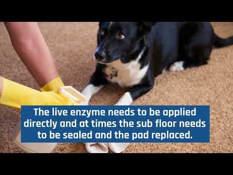 Odor Elimination - All Kleen Carpets