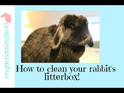 How to clean your rabbit's litter box