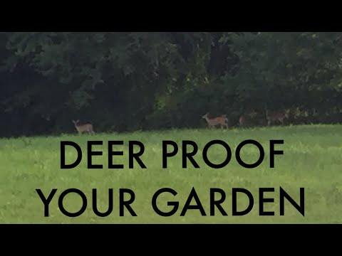DIY: Invisible Deer Fence