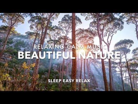 Calming Relaxing Music,  Nature Sleep, Stress Relief Music, Deep Dreams Sleeping Music