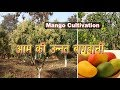 Scientific methods of Mango Cultivation | Aam ki Unnat Baghwani | Tips for Profitable Farming