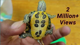 Rare Newly born cute baby Turtle Unboxing|Parul Nagar|