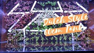 Aquascape Dutch Style Update Dutch Style Usia 1 Minggu