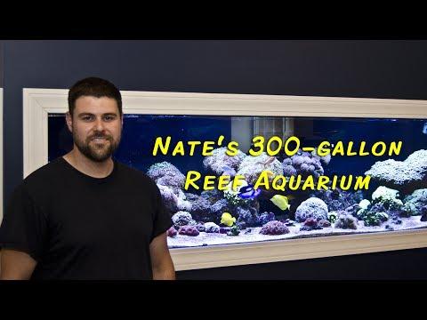 Nate's 300 gallon Reef