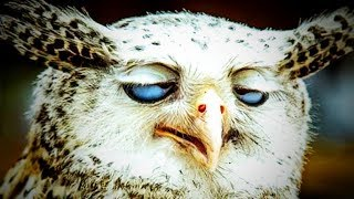 Funny Owls 🦉😂 Awesome Owls Playing (Full) [Funny Pets]