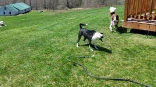 Tripp water hose 2