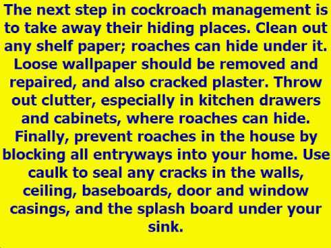 How to Get Rid of Roaches in Your Home or Apartment