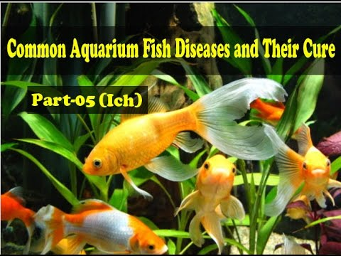 Common Aquarium Fish Diseases Part-5 (Ich)