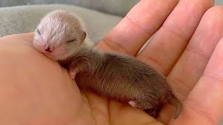 AWW CUTE BABY ANIMALS Videos Compilation Funniest and cutest moments of animals - Soo Cute kiki #11