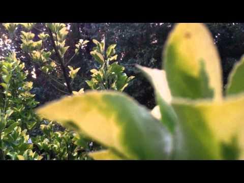 iPhone camera test focus