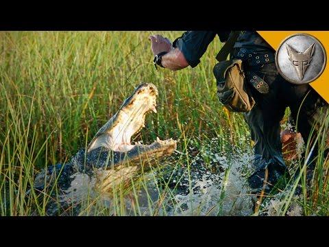 CLOSE CALL! Alligator Attacks Cameraman!
