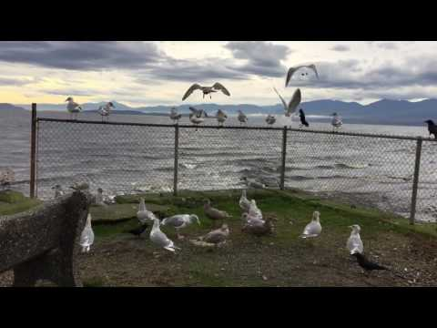 Beautiful nature with birds eating