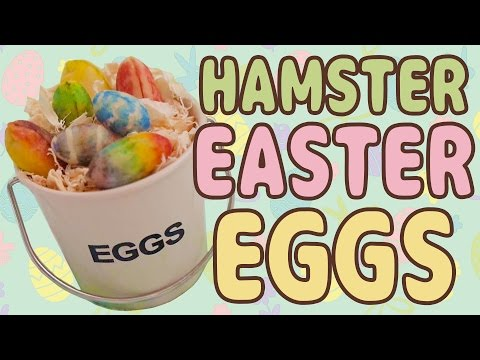 🐣 Easter Eggs 🐣 Hamster Kitchen
